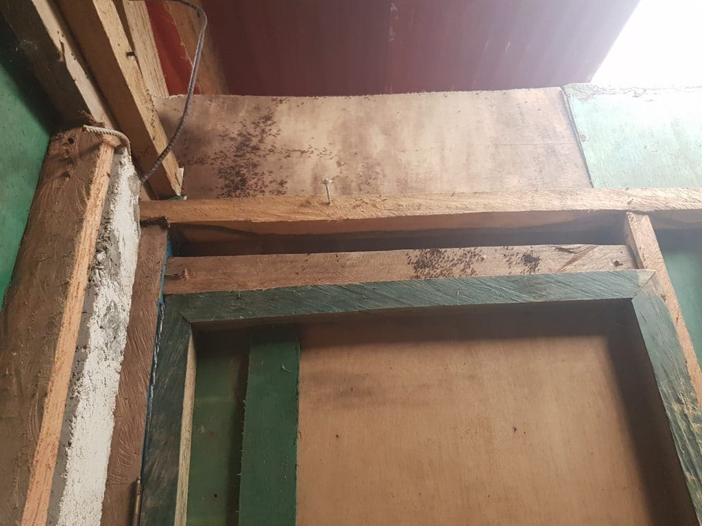 Termites on the walls