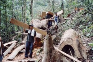 Transport of confiscated illegal timber © PhilinCon